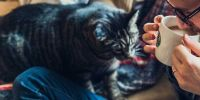 Los felinos sufren con la presencia de personas durante 24 horas