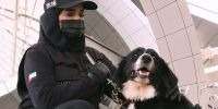 Dubái anuncia los primeros perros contra el covid en los aeropuertos