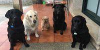 Una manada de cinco perros de asistencia ayuda a una niña y su madre