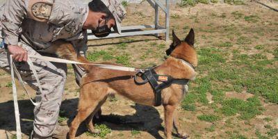 Protección canina en la Armada