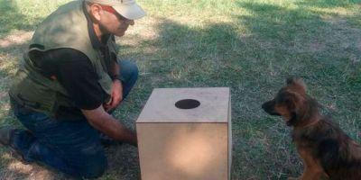 Los perros pueden descubrir asesinos en una rueda de reconocimiento tras oler la escena del crimen