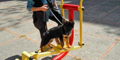 Cachorros en prácticas