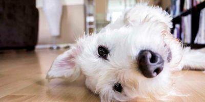 Opinión: Perros en comunidades