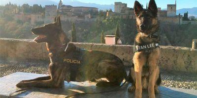 Algunos perros de unidades caninas son víctimas de enfrentamientos entre políticos