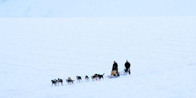 Los esquimales han pervivido en el tiempo gracias a sus  perros de trineo