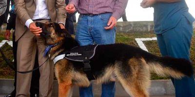 En Quito adiestran perros de la calle que luego viven en el interior de organismos públicos