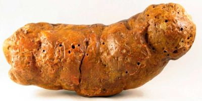 Una aplicación distingue los excrementos caninos de los humanos de miles de años