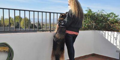 ¿Huye el coronavirus de las casas dónde hay un perro?