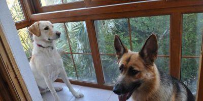 Los perros eligen la hipoteca