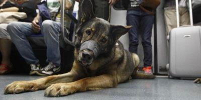 125.000 mascotas al año en el metro de Madrid