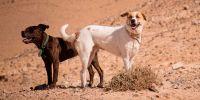 Uno de cada tres perros que sufre un golpe de calor no sobrevive
