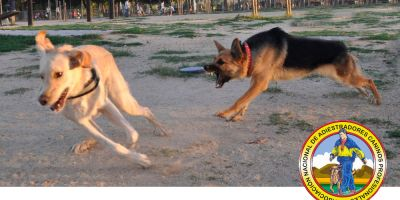 SOS... ¡mi perro es reactivo!