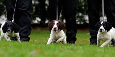 400.000 euros para acallar ladridos de perros policía