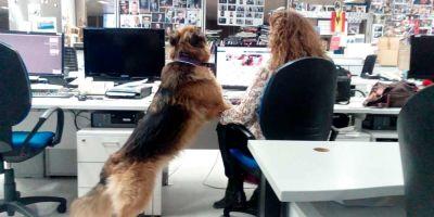 Compañeros en el trabajo