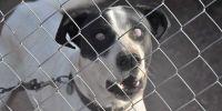 ¿Es un negocio la recogida de perros abandonados?