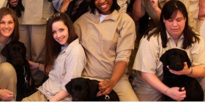 Perros criados en la cárcel para mimar a los veteranos de guerra