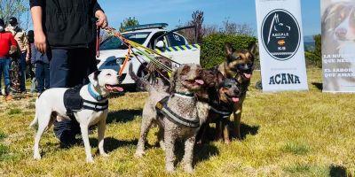 Guías caninos policías alegran el día a personas con diversidad funcional
