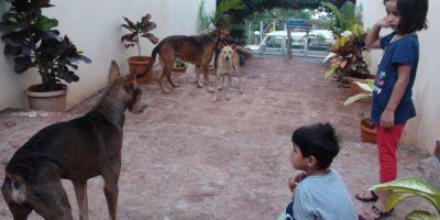 En India pegan carteles  por las calles para buscar  novia a sus perros