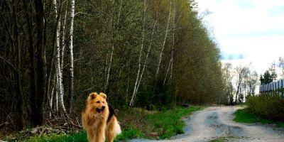 El medio natural sufre con los perros incontrolados