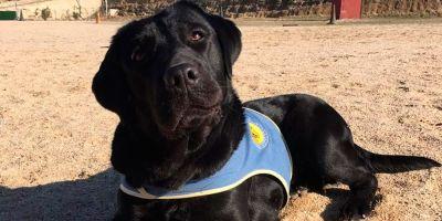Motivos tenebrosos  mueven los robos de perros