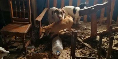 La licencia de un centro canino no es  suficiente garantía de protección animal