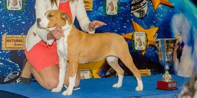 ¿Debe incluir el pedigrí el ADN de los padres de los cachorros?