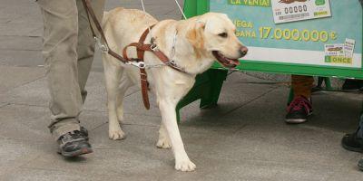Los perros guía tendrán sus medicinas en braille