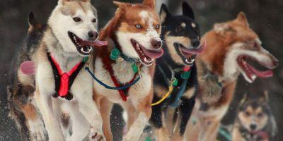 Mushing: la fusión entre el hombre y el perro