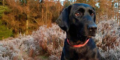 El 95% de los perros puede transmitir virus, no el COVID-19