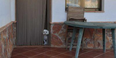 ¿Por qué un perro de ciudad no se adapta a la vida del pueblo?