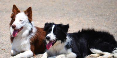 Los conflictos con perros son por mala interpretación en la comunicación