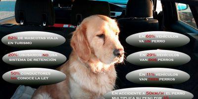 Transporte en vehículo: ¿maletero, asiento, jaula, transportín?