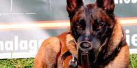 """Unidad canina Conil: """"un perro es como 25 policias"""""""