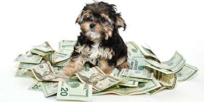 ¿Cómo puedo dejar la herencia a mi perro?