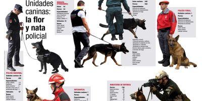 Unidades caninas: la flor y nata policial