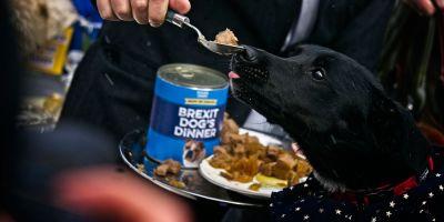 Brexit: Guía para ir o venir  de Reino Unido con mascota