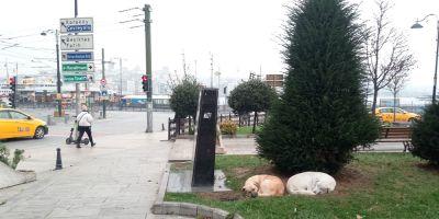 Los perros callejeros deTurquía están protegidos por Ley