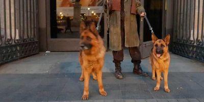 Los perros van a la ópera