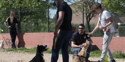 Perros contra el alcohol y las drogas
