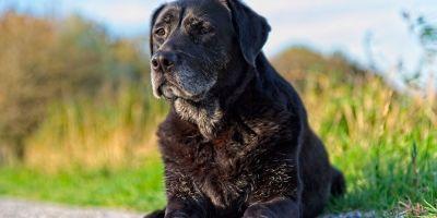 Se buscan 10.000 perros para evitar su envejecimiento