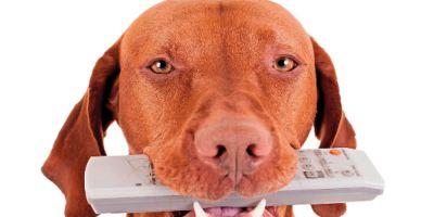 Las TV inventan canales adaptados a la visión de los perros