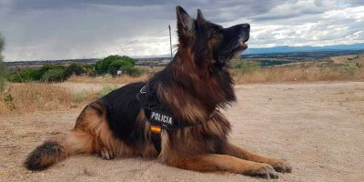 Los policías exigen un estatus especial para sus perros