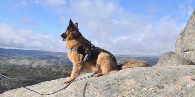 Tu perro sabe dónde está el norte