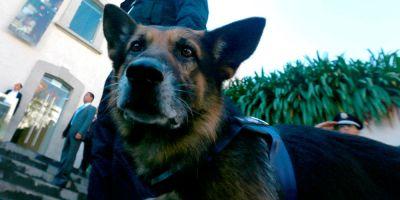 30 años de perros incorruptibles contra los narcos