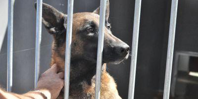 EE UU paraliza el envío de perros detectores a Jordania y Egipto por maltrato