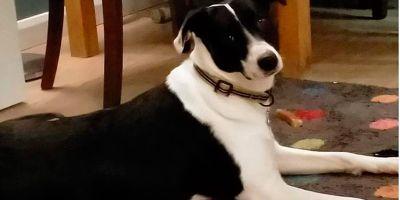12 meses de condena por no esterilizar a dos perros adoptados