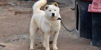 La raza de perro que embellece al excitarse