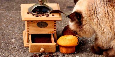 ¿Qué tiene prohibido comer tu gato?