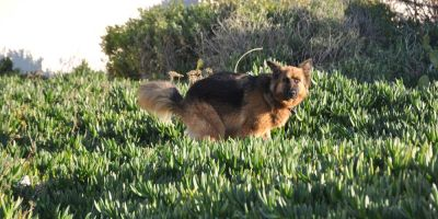 El ADN blinda a  los perros
