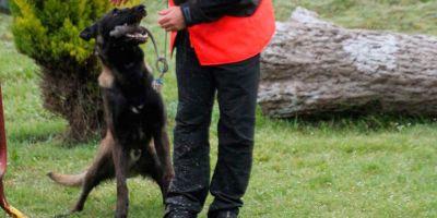 Los perros de vigilancia están preparados para disuadir, intimidar e intervenir si fuera necesario